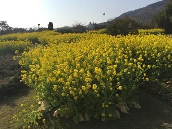 淡路島国営明石海峡公園008.jpg