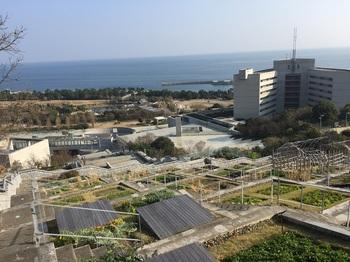 淡路島国営明石海峡公園024.jpg
